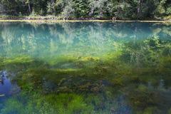 Μια δασική λίμνη που γεμίζουν με το μπλε νερό με το ραδόνιο αναπηδά στοκ φωτογραφία