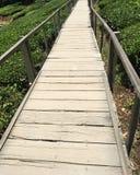 Μια διάβαση για τον επισκέπτη για να επισκεφτεί το αγρόκτημα τσαγιού στοκ εικόνα