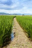 Μια διάβαση τρέχει μέσω ενός τομέα της ανάπτυξης ρυζιού κοντά σε Arashiyama Ιαπωνία στοκ φωτογραφία με δικαίωμα ελεύθερης χρήσης