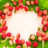Μια διεσπαρμένη συγκομιδή των άγριων φραουλών Κόκκινο ώριμο μούρο σε ένα ελαφρύ υπόβαθρο Ελαφρύ έμβλημα τροφίμων έννοιας διατροφή Στοκ Εικόνα