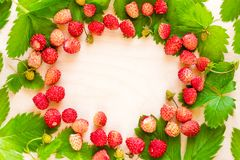 Μια διεσπαρμένη συγκομιδή των άγριων φραουλών Κόκκινο ώριμο μούρο σε ένα ελαφρύ υπόβαθρο Ελαφρύ έμβλημα τροφίμων έννοιας διατροφή Στοκ Φωτογραφία