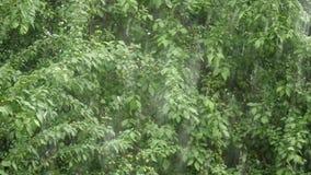 Μια δυνατή βροχή στο πράσινο κλίμα δέντρων φιλμ μικρού μήκους