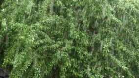 Μια δυνατή βροχή στο πράσινο κλίμα δέντρων απόθεμα βίντεο