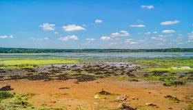 Μια εγκαταλειμμένη ζωηρόχρωμη παραλία υγρότοπου του Dorset Στοκ Φωτογραφίες