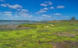 Μια εγκαταλειμμένη ζωηρόχρωμη παραλία υγρότοπου του Dorset Στοκ φωτογραφία με δικαίωμα ελεύθερης χρήσης
