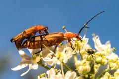 Μια ειδική ημέρα για τα έντομα στις συγκεκριμένες εποχές Στοκ Φωτογραφίες