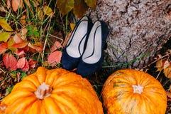 Μια εικόνα των κολοκυθών που βρίσκεται κοντά στα μπλε νυφικά παπούτσια Γαμήλιες διακοσμήσεις Στοκ φωτογραφία με δικαίωμα ελεύθερης χρήσης