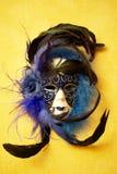 Μια ενετική μάσκα. Στοκ εικόνα με δικαίωμα ελεύθερης χρήσης