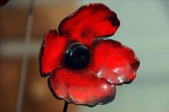 Μια ενιαία κόκκινη παπαρούνα γυαλιού στο Έξετερ, Devon στοκ φωτογραφία με δικαίωμα ελεύθερης χρήσης