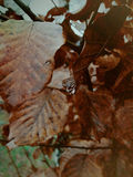 Μια ενιαία πτώση σε ένα πορτοκαλί φύλλο φθινοπώρου Στοκ φωτογραφία με δικαίωμα ελεύθερης χρήσης