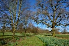 Μια λεωφόρος των δέντρων σε ένα πάρκο. Στοκ Φωτογραφία