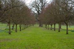 Μια λεωφόρος των δέντρων σε ένα πάρκο. Στοκ Εικόνες