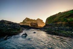 Μια εύθυμη σφραγίδα μωρών πηδά μέσα και έξω από το νερό στη Νέα Ζηλανδία στοκ εικόνα με δικαίωμα ελεύθερης χρήσης