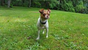 Μια ζωή σκυλιών Στοκ Εικόνες