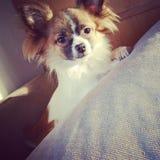 Μια ζωή σκυλιών Στοκ εικόνες με δικαίωμα ελεύθερης χρήσης
