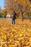 Μια ζωηρόχρωμη εικόνα υποβάθρου του φθινοπώρου, πεσμένη φθινόπωρο αφήνει την ιδέα στοκ φωτογραφία με δικαίωμα ελεύθερης χρήσης