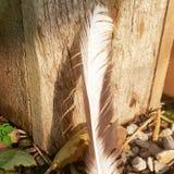 Μια ηλιοθεραπεία φτερών στοκ εικόνα