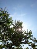 μια ηλιόλουστη ημέρα στοκ εικόνες