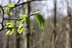 Μια ημέρα σε ένα δάσος Στοκ φωτογραφίες με δικαίωμα ελεύθερης χρήσης