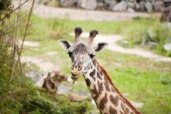 Μια ημέρα στο ζωολογικό κήπο στοκ φωτογραφία με δικαίωμα ελεύθερης χρήσης