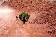 Μια ηλικιωμένη γυναίκα συνεχίζει το χορτάρι γαιδάρων της στα βουνά ατλάντων στο Μαρόκο Στοκ εικόνες με δικαίωμα ελεύθερης χρήσης