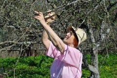 Μια ηλικιωμένη ψαλίδα κηπουρών γυναικών κόβει τον κλάδο δέντρων της Apple στο s Στοκ Εικόνες