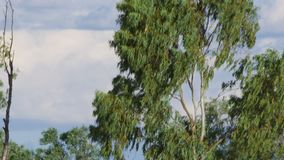 Μια θέση συστημάτων σηματοδότησης και ένας πυροβολισμός δέντρων φιλμ μικρού μήκους