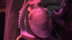 Μια θαλάσσια ζωή χταποδιών φιλμ μικρού μήκους