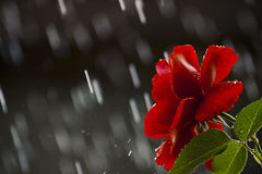 Μια θερινή βροχή Στοκ φωτογραφία με δικαίωμα ελεύθερης χρήσης