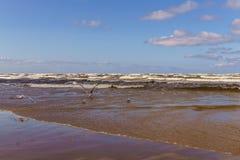 Μια θυελλώδης ημέρα στην ακτή του Κόλπου της Ρήγας Jurmala, Λετονία - τον Αύγουστο του 2017 στοκ εικόνα με δικαίωμα ελεύθερης χρήσης