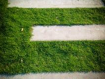 Μια διάβαση πεζών τσιμέντου και από την πράσινη χλόη Στοκ εικόνα με δικαίωμα ελεύθερης χρήσης