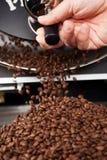 Μια διαδικασία στο φίλτρο χτυπά τα ψημένα φασόλια καφέ στοκ φωτογραφίες με δικαίωμα ελεύθερης χρήσης