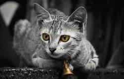 Μια ινδική γάτα με τη χρυσή συνεδρίαση κουδουνιών στο σύνθετο τοίχο στοκ εικόνες