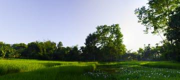 Μια ινδική σκηνή του χωριού τομέων Στοκ εικόνα με δικαίωμα ελεύθερης χρήσης