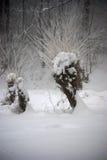 Μια ιτιά το χειμώνα Στοκ εικόνα με δικαίωμα ελεύθερης χρήσης