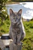 Γάτα στον ήλιο. Στοκ εικόνες με δικαίωμα ελεύθερης χρήσης