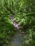 Μια κάμπτοντας πορεία στη νεράιδα πράσινη δασική Ουάσιγκτον, ΗΠΑ Στοκ Φωτογραφίες