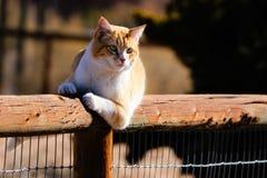 Μια κίτρινη τιγρέ γάτα που κλίνει σε έναν πόλο φρακτών στοκ φωτογραφία με δικαίωμα ελεύθερης χρήσης