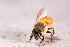 Μια κακοήθης μάχη τον άφησε τόσο ικανό όσο ένα μυρμήγκι Στοκ εικόνα με δικαίωμα ελεύθερης χρήσης