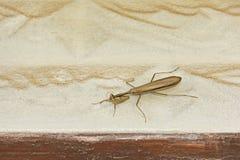 Μια καφετιά επίκληση Mantis επάνω από ένα πλαίσιο πορτών σπιτιών στοκ φωτογραφία