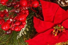 Μια κινηματογράφηση σε πρώτο πλάνο των διακοσμήσεων Χριστουγέννων με την πρασινάδα, τα poinsettias, και τα κόκκινα μούρα στοκ εικόνες