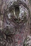 Μια κοιλότητα από ένα παλαιό δέντρο στοκ φωτογραφία με δικαίωμα ελεύθερης χρήσης
