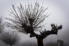 Μια κορώνα ενός κοίλου δέντρου που προεξέχει από την υδρονέφωση Στοκ Εικόνα