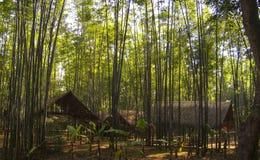 Μια κρυμμένη θέση στη ζούγκλα Στοκ Φωτογραφίες