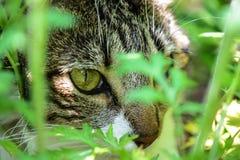 Μια κρυμμένη όμορφη γάτα στοκ εικόνες με δικαίωμα ελεύθερης χρήσης