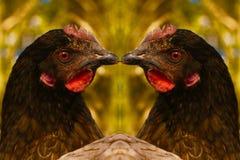 Μια κότα Bluebell που αντανακλάται Στοκ Εικόνα