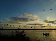 Μια λίμνη και πουλιά σε ένα καλώδιο στοκ φωτογραφίες