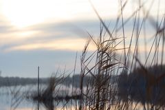 Μια λίμνη με τους καλάμους στην αυγή το φθινόπωρο Στοκ φωτογραφίες με δικαίωμα ελεύθερης χρήσης