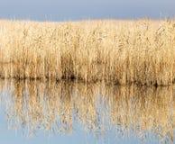 Μια λίμνη με τους καλάμους στην αυγή το φθινόπωρο Στοκ εικόνα με δικαίωμα ελεύθερης χρήσης