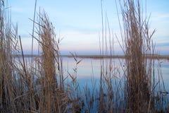 Μια λίμνη με τους καλάμους στην αυγή το φθινόπωρο Στοκ Εικόνες